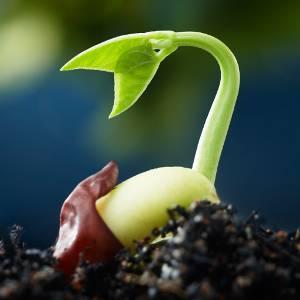 Planta naciendo